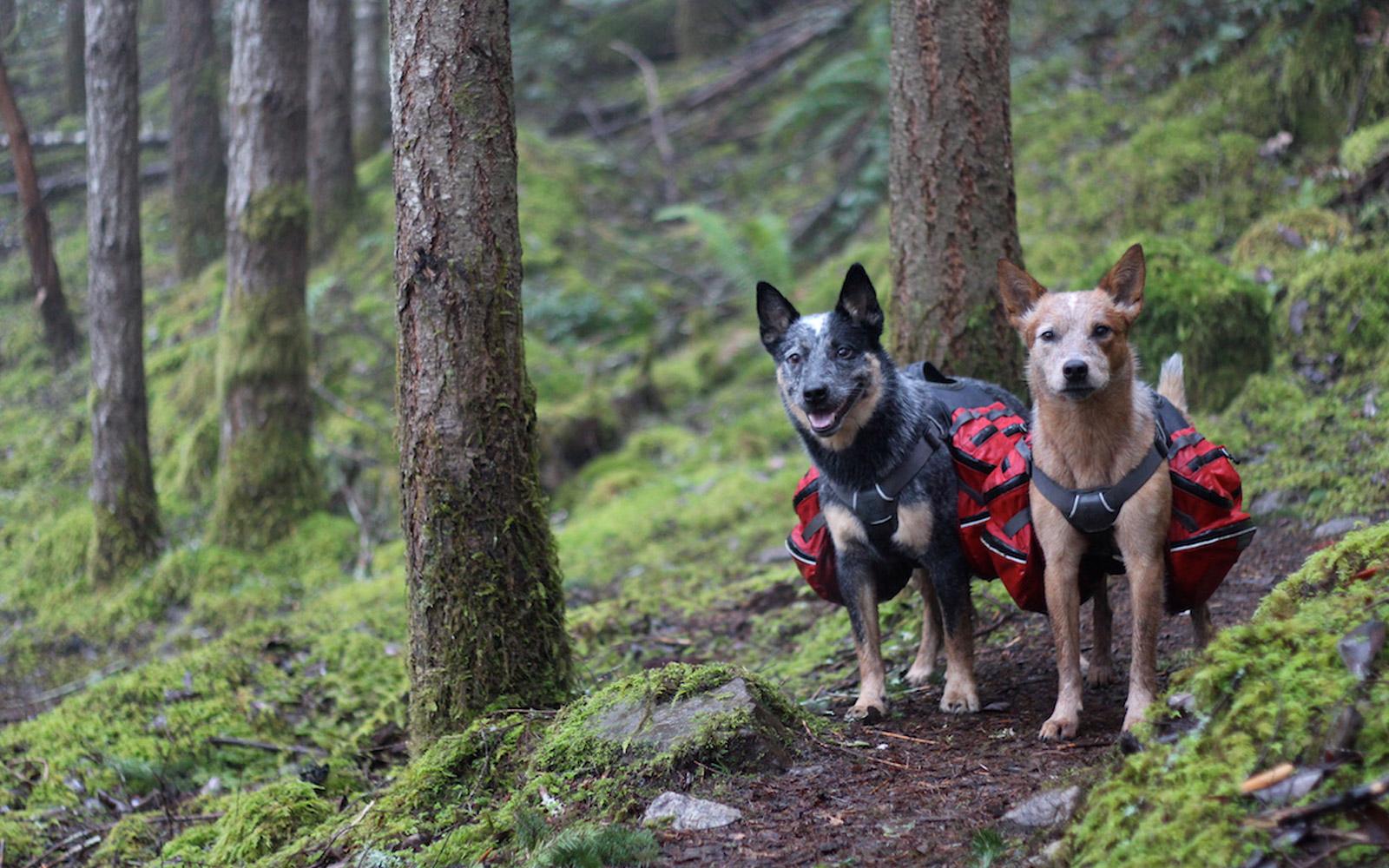 DogPackingEssentials